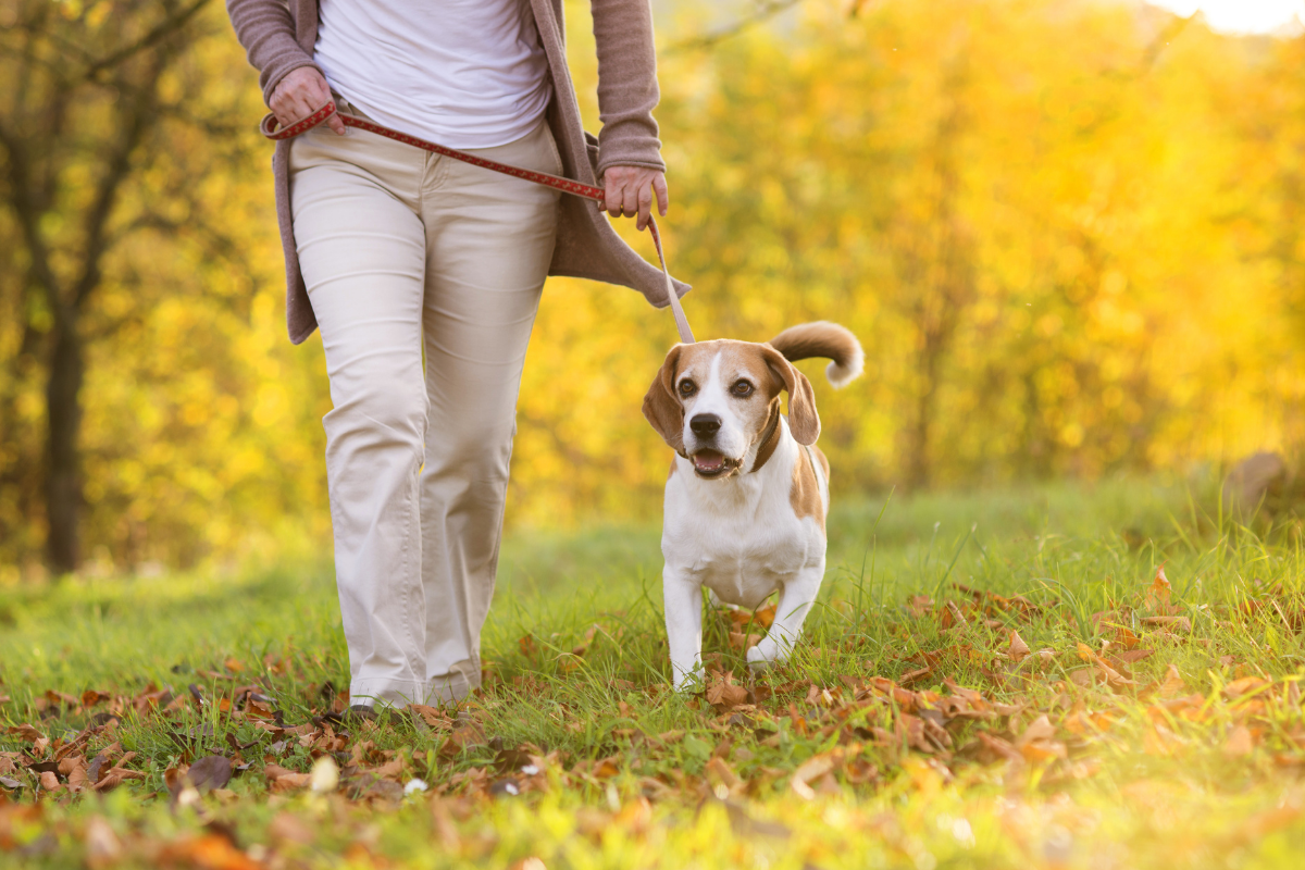 Dog friendly walking routes Norwich, Norfolk