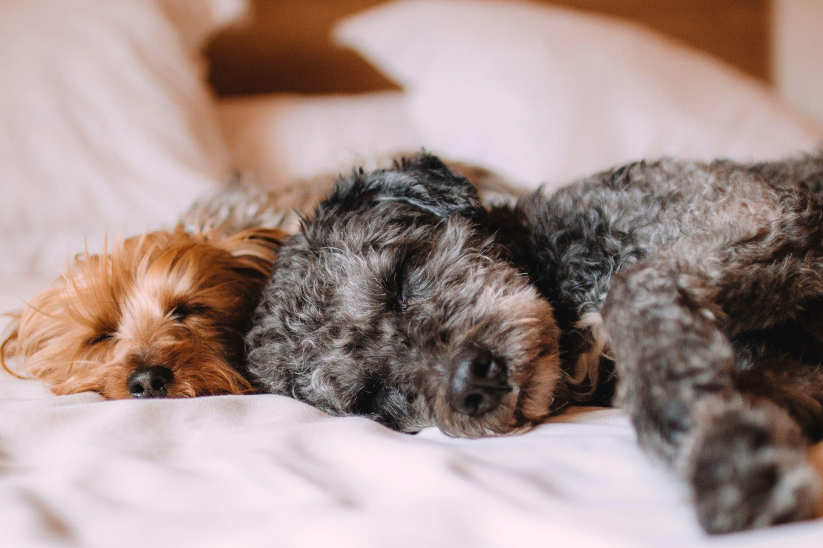 Dog Friendly hotel Norwich, Norfolk