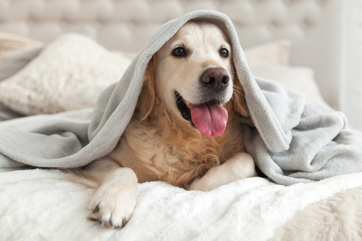 Dog friendly hotel package Norwich, Norfolk